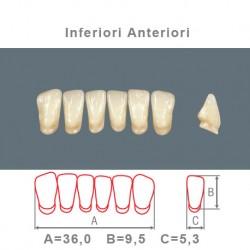 Denti Resina Anteriori Inferiori - 07