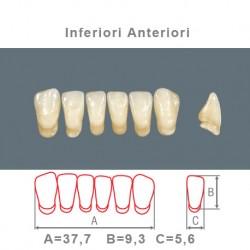 Denti Resina Anteriori Inferiori - 010