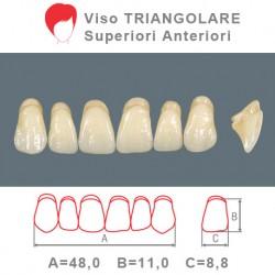 Denti Resina Anteriori Superiori - viso Triangolare 40