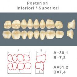 Denti Resina Posteriori Superiori-Inferiori - 70