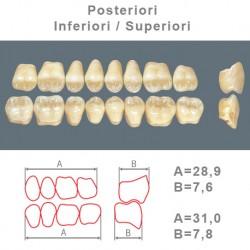 Denti Resina Posteriori Superiori-Inferiori - 74