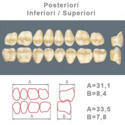 Denti Resina Posteriori Superiori-Inferiori - 76