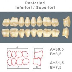 Denti Resina Posteriori Superiori-Inferiori - 77